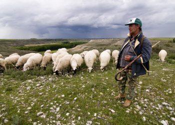 ¿Cuál es el verdadero rol de un pastor?